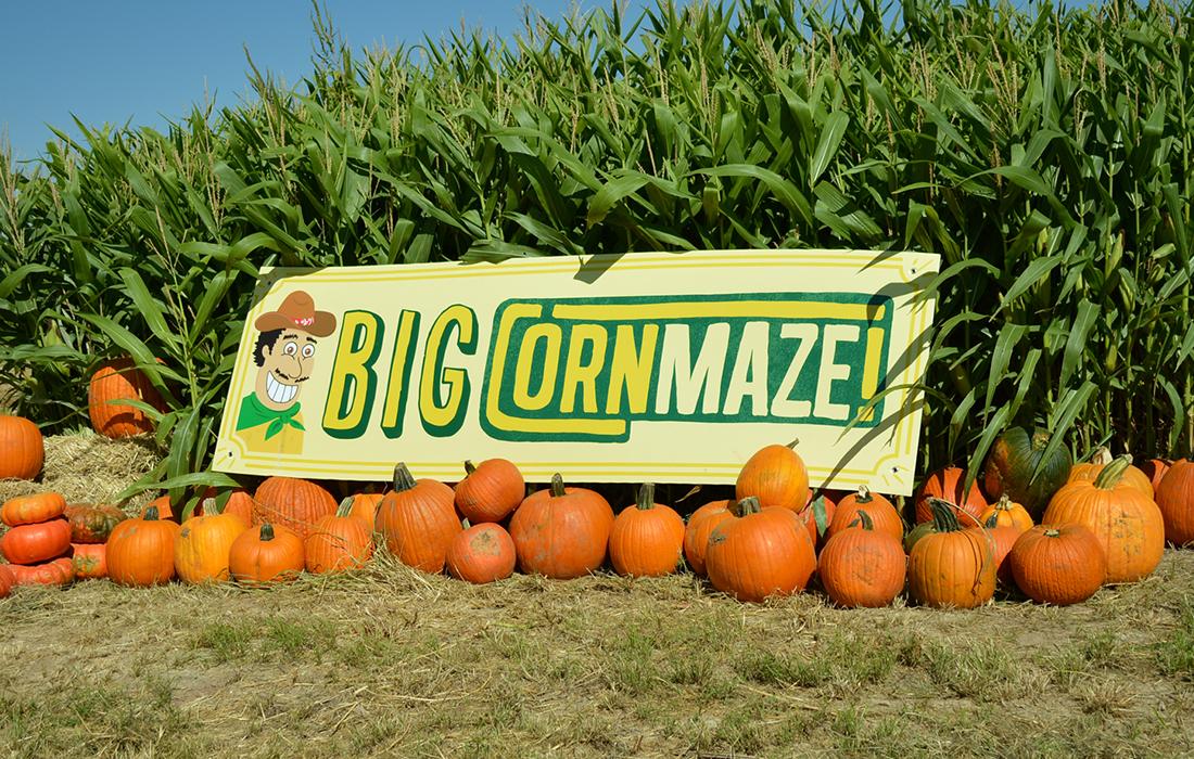 Cornmaze-7